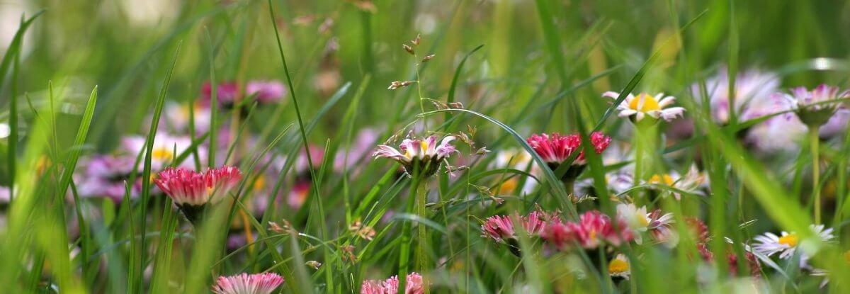Gras bloemen voor contact