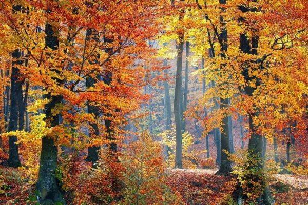 Bos met herfstkleuren herfstkamperen