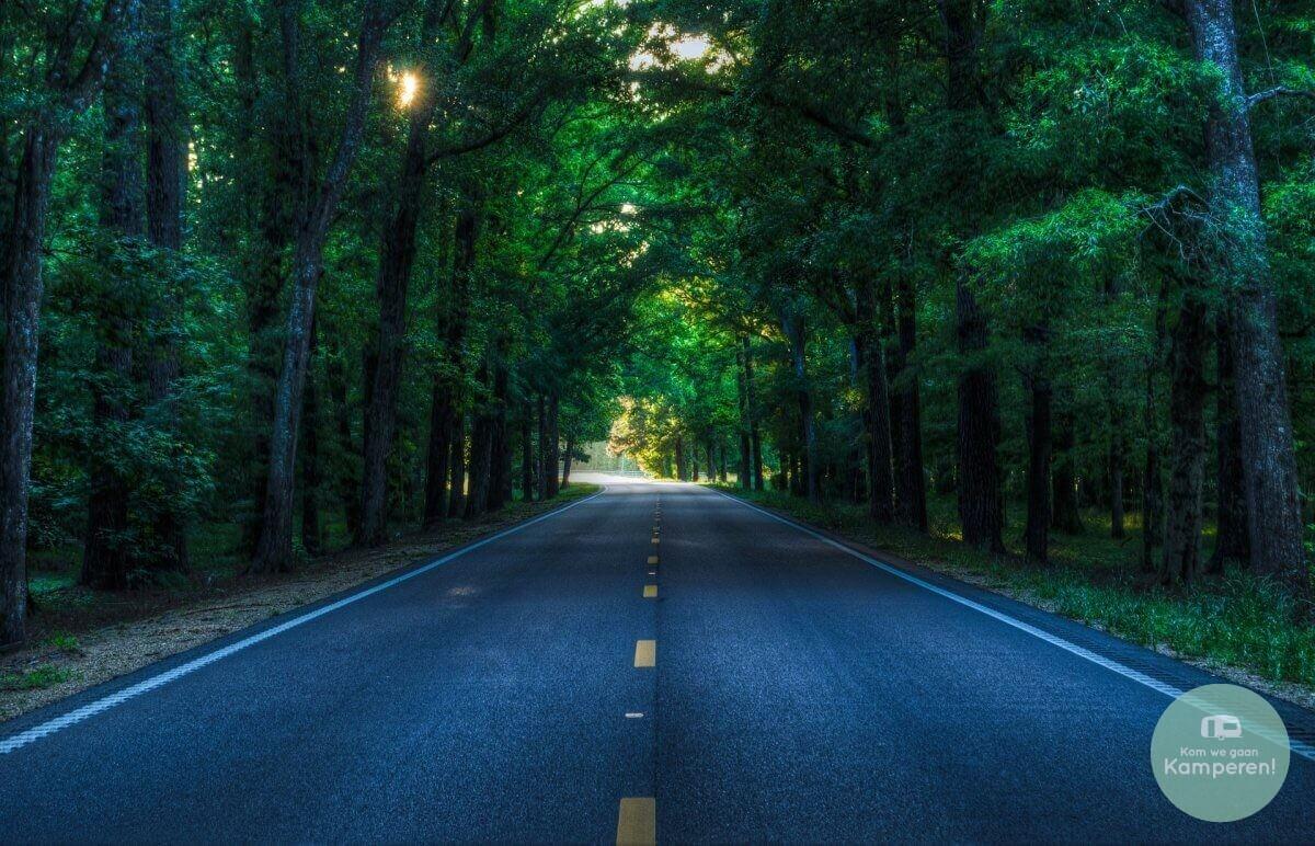 Roadtrip weg door bos