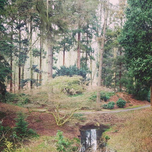 Onze achtertuin! Rara waar is dit? forest wandeling natuur outdoorhellip
