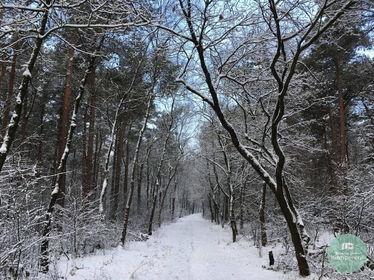 Sneeuw bos kamperen backpack trekkershut