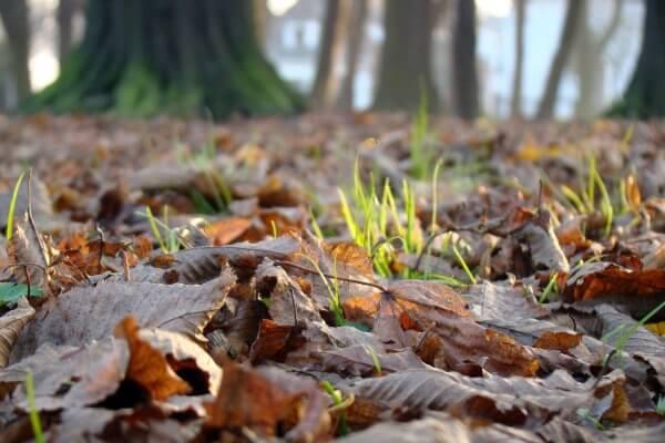 herfst gras zon oktober kamperen